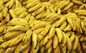 3293588-multiple+bananas